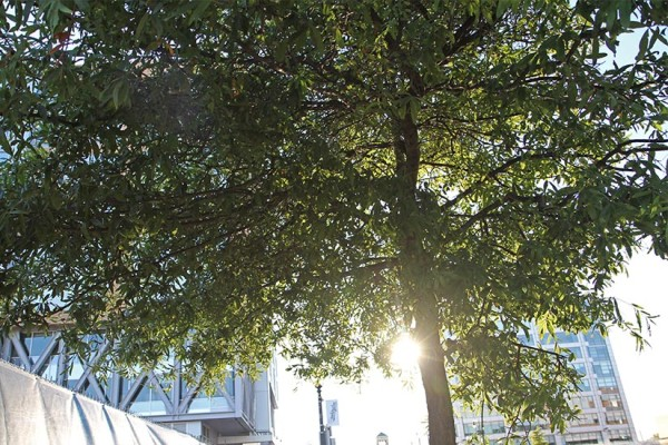Sunset through tree leaves