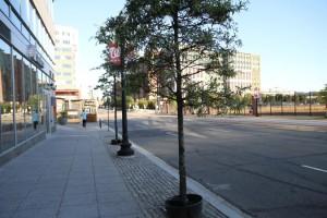 Street trees on M Street NE