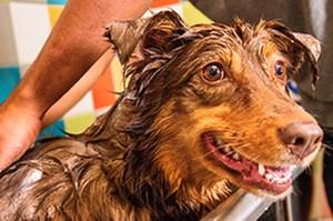 Pet Wash (Photo via Petco)