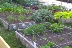 Wylie Street Community Garden (Photo via Save Wylie Garden)