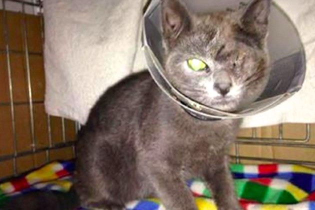 Ranger, after being shot in the eye (Photo courtesy of Washington Humane Society)