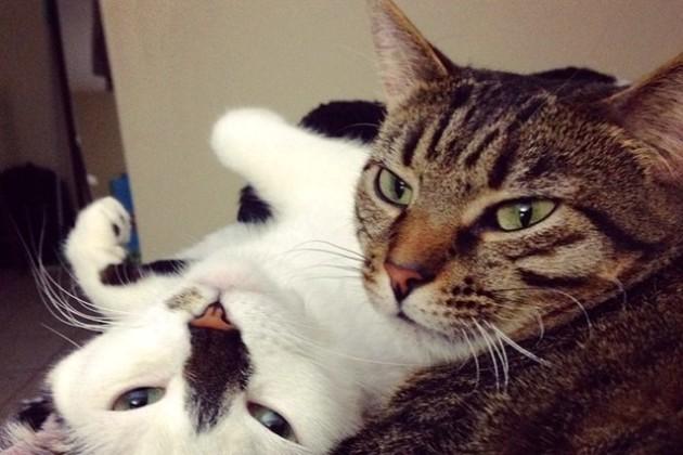 Moo and Basil