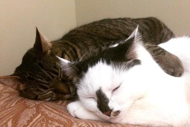 Basil and Moo