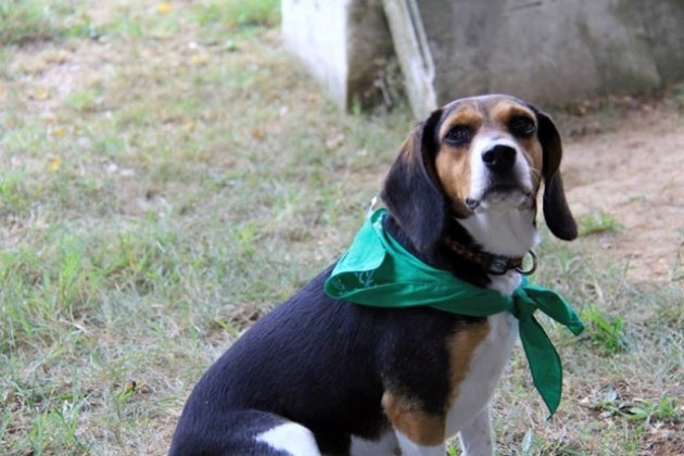 Day of the Dog 2014 (Photo via Facebook/Congressional Cemetery)