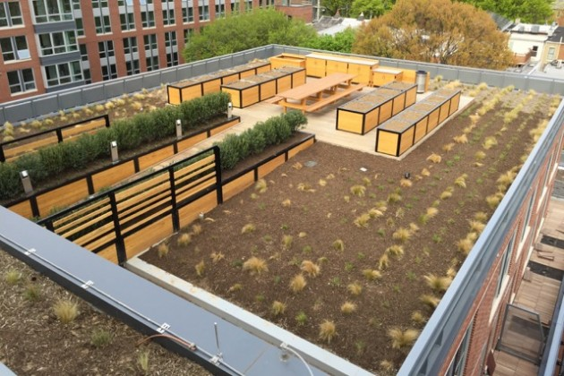 Station House rooftop garden