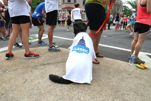Freddie watches the 2015 Capitol Hill Classic 10K