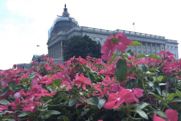 U.S. Capitol flowers (Photo via Twitter/SenateSergeantAtArms)