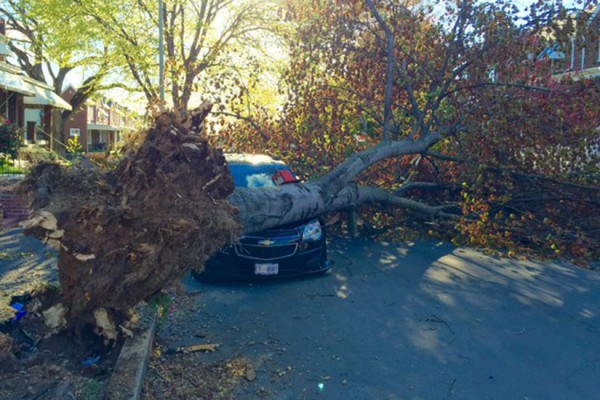 Wind topples tree on the 1600 block of D St. NE over the weekend (Photo via Twitter/Charles Allen)