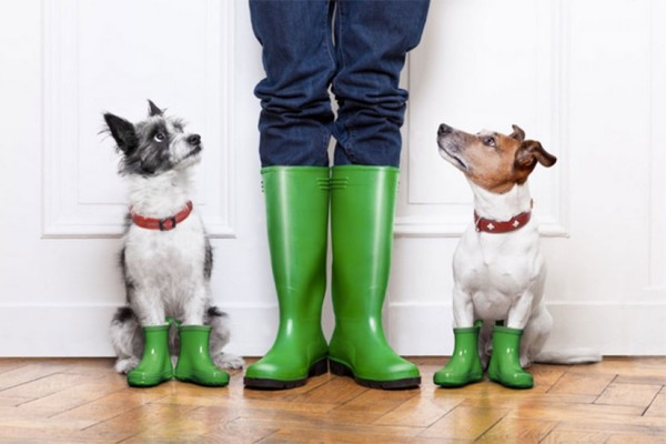 Pet-wise rain